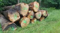 2018年6月供应AB级法国白橡原木