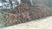 2019年3月尚高木业供应欧洲黑胡桃原木锯材级