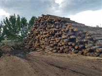 2018年8月尚高木业供应欧洲椴木大径材具有精细均匀纹理及模糊的直纹